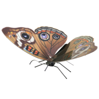 Metal Earth - Butterfly Buckeye